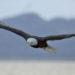 Copyright Natural Habitat Adventures / Eric Rock